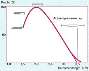 Grafiek van de kracht-lengte relatie
